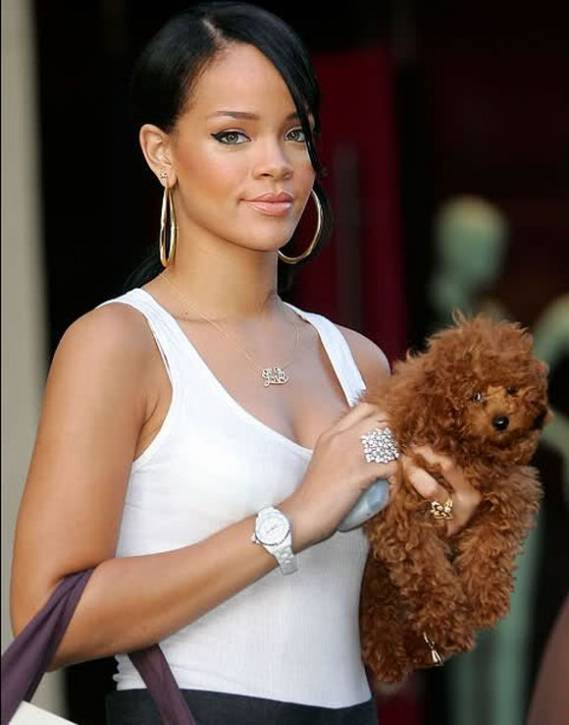 Rihanna has 3 pets all of them dogs belonging to the Maltese breed who ...