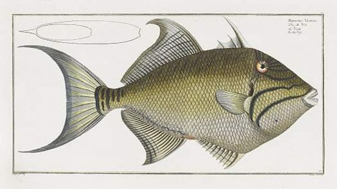 The most beautiful book on fish to fetch upto $80,700