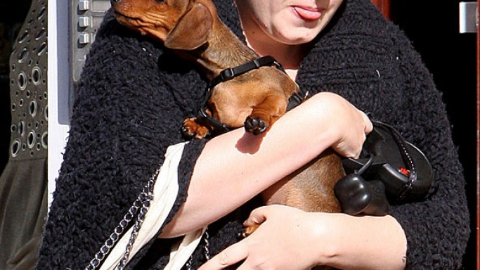 "Singer Adele owns a male Dachshund named ""Louie""."